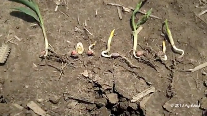 Potential Replant Field